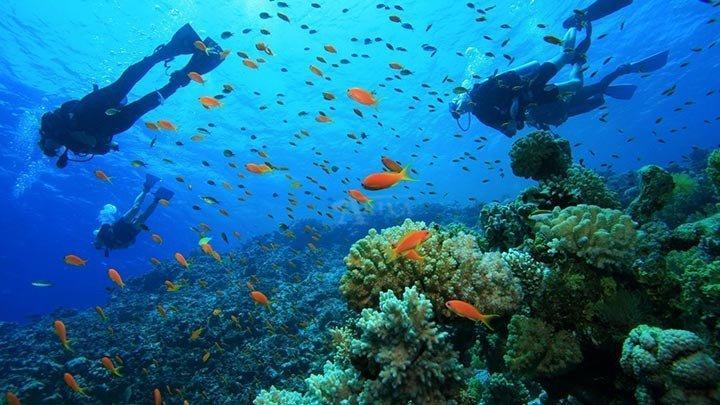 Bodrum Diving