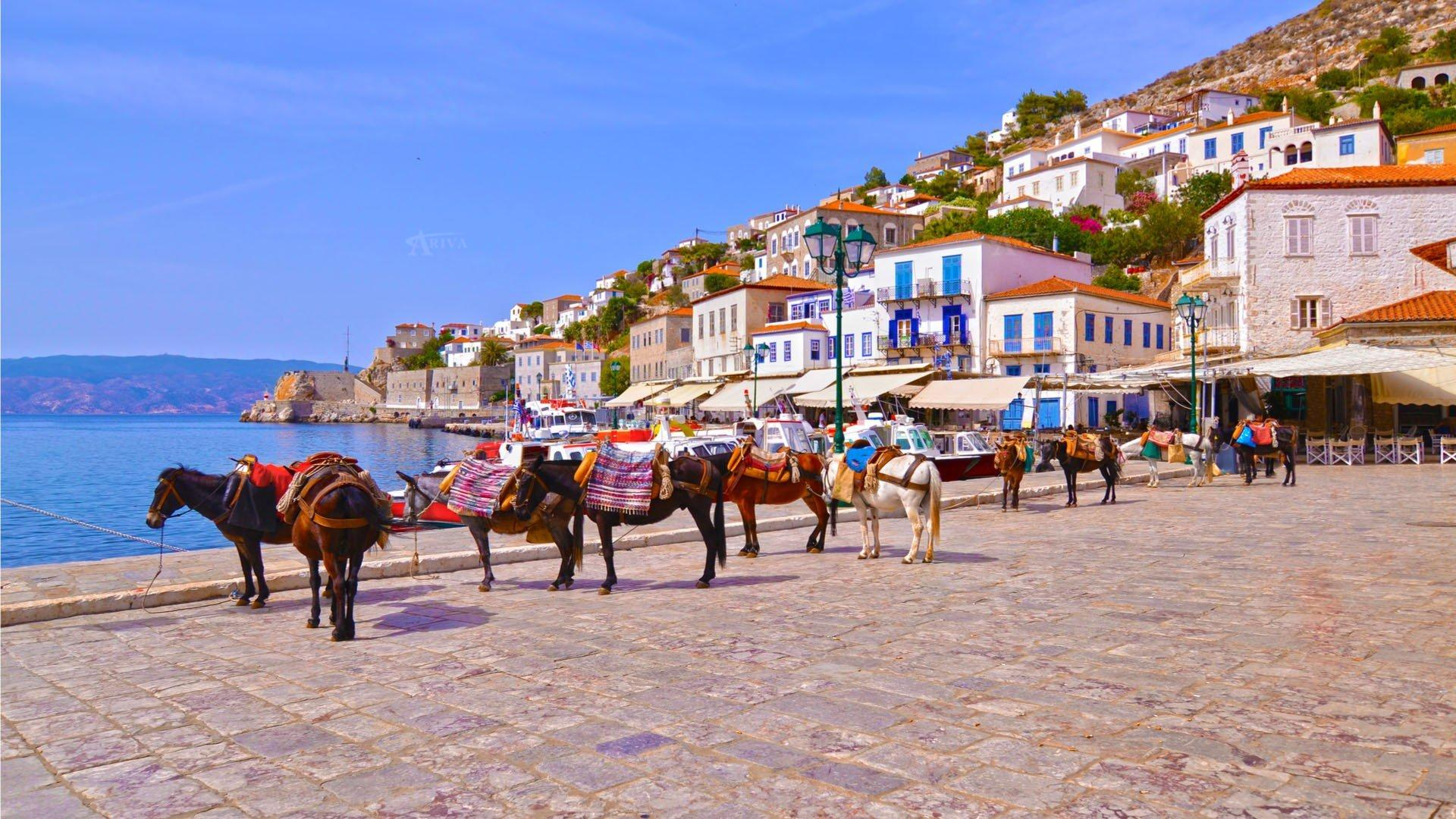 Donkeys In Hydra Island