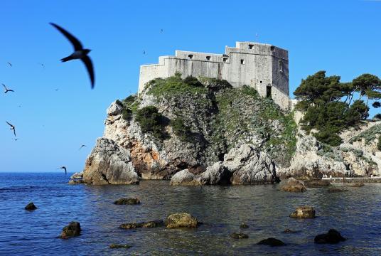 Dubrovnik Birds